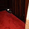Germany - Red Carpet