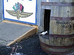 Indianapolis - Barrel Wings