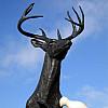 Indianapolis - Elk Dove