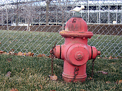 Indianapolis - First Hydrant
