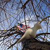 Indianapolis - Flag Tree