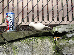 Portland - Bud Light
