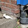 Baltimore - Drain Pipe