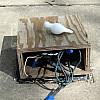 Baltimore - Electric Box