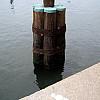 Baltimore - Harbor Bumper