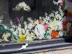 Baltimore - Window Flowers