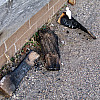 Minneapolis - Burnt Logs