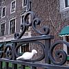 Minneapolis - Roth Iron Fence