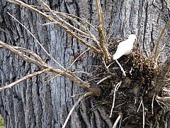 Minneapolis - Tree Nest