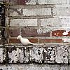 New Orleans - Brick Wall