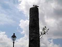 New Orleans - Pier Pole
