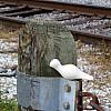 New Orleans - Railway Pole