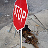 New Orleans - Stop Sign