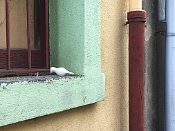 Olot,Spain_windowsill