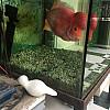 Mumbai Fish