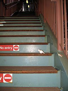 Chicago - Stairway