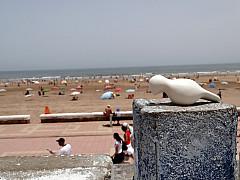 Morocco - North Africa Beach