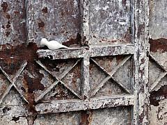 Morocco - Rusty Gate 2
