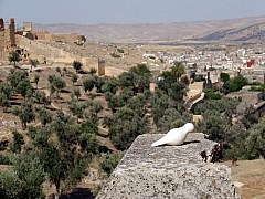 Morocco - Top of Mountain