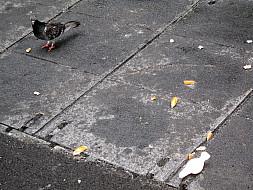 New York - Pigeon Street