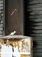 New York - Rust