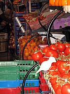 New York - Vegetables
