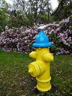 Savannah, Georgia - Fire and Flowers