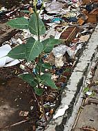 Mumbai Trash