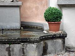 Gerda, Switzerland - Fountain + Plant