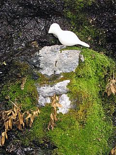 Southern, CO - Trail Moss