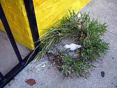 Los Angeles - Grass Wreath