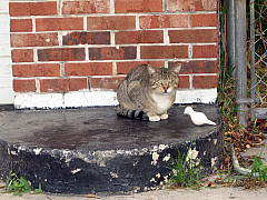 Miami - Cat and Dove
