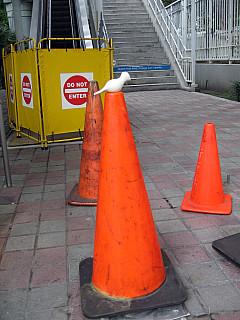 Miami - Cones