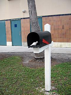Miami - Mail Box