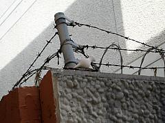 Miami - Pigeon Wire