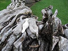 Miami - Roots