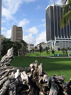 Miami - Stump Skyline