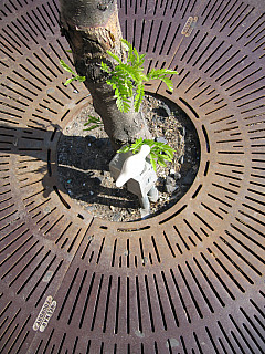 Chicago - Tree Grate