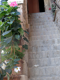 Italy, Assisi - Flower Stairs