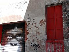 Italy, Rome - Monkey Graffiti