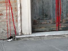 Italy, Venice - Red Drip Door