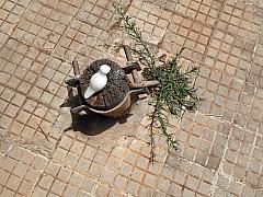Morocco - Sidewalk Stump 1