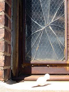 Rochester - Broken Window