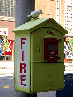 Rochester - Fire