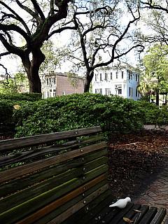 Savannah, Georgia - Park Bench