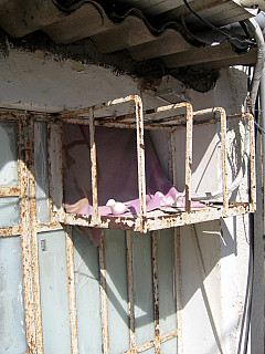 Israel - Pink Blanket