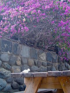 Israel - Pink Picnic