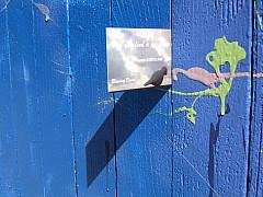DNC - Blue Fence Post Card