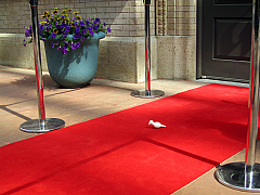 DNC - Red Carpet