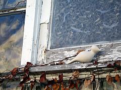 Indianapolis - Glazed Window